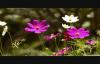 God Is A Healer Kurt Carr_ Faith Howard Lyrics.flv