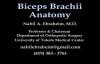 Biceps Brachii Anatomy  Everything You Need To Know  Dr. Nabil Ebraheim