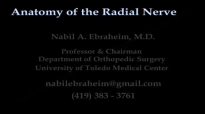 Anatomy Of The Radial Nerve  Everything You Need To Know  Dr. Nabil Ebraheim