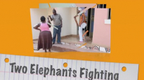 WHEN TWO ELEPHANTS FIGHTING. Kansime Anne. African Comedy.mp4